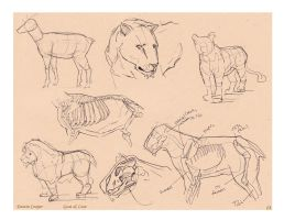 Lion and Goat - Comparative Anatomy by CatCouch