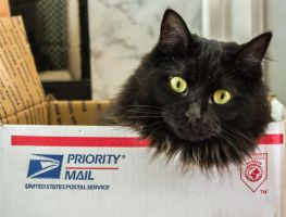 Priority Mail by captainslack