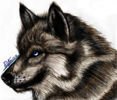 Wolf HD Color by Proteusz