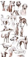 The Sighthound sketchdump by obeythekiwi
