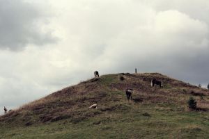 A hill full of hores by AnSophia