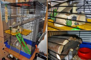 Roxie's improved cage by Angi-Shy