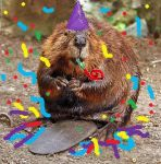 beaver birthday by chaos3621