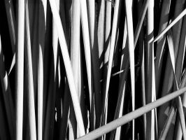 Dead Reeds Black+White by Karlika