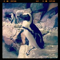 Posing Penguin! by ahley