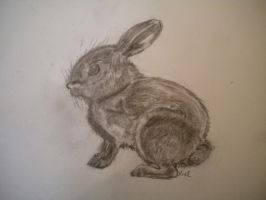 Baby bunny drawing by writerwithoutapencil