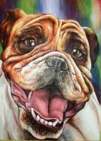 English Bulldog by kamilafranke