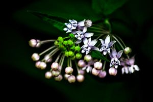 Clustered Together by M-Lewis