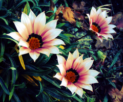 Flowers 77 by Humble-Novice