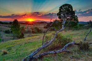 Branch Out by SByrnes