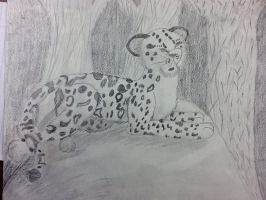 Snow Leopard by lucymaggielover