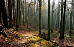 A late autumnal forest walk by jchanders
