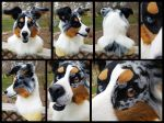 Remmy The Blue Merle Tri Border Collie! by KandorinCreations