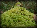 moss by Fabharty