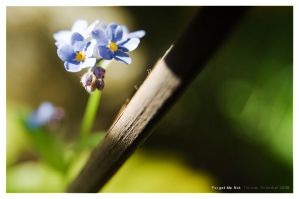 Forget Me Not by yiria