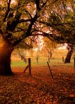 Autumn Day by julesthomas