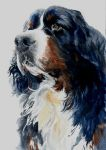 Bernese Mountain Dog by Pickleweasels