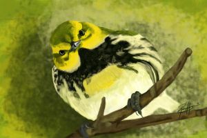 Black-throated Green Warbler by ProjectDarkling