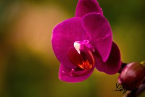 Some Flower by KoljaNa