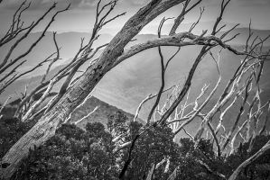 Directions of the Forest by MarkLucey