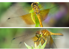 Dragon Fly by Noise-Less
