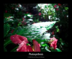 Photosynthesis by KDEWolf
