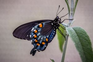 Butterfly by 904PhotoPhactory