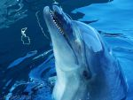A Happy Dolphin by ArsalanKhanArtist
