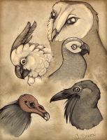 Some of my Favorite Birds by black-brd