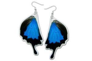 Real Blue Mountain Swallowtail Butterfly Earrings by TheButterflyBabe