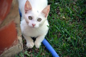 My Nellas 2 by EmberRoseArt
