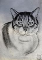cat EYES on Paper by BsArtwork