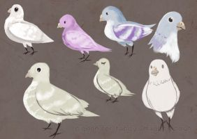 Pigeon for Tabby by ditto9