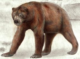 South American Giant Short-faced Bear by Jagroar