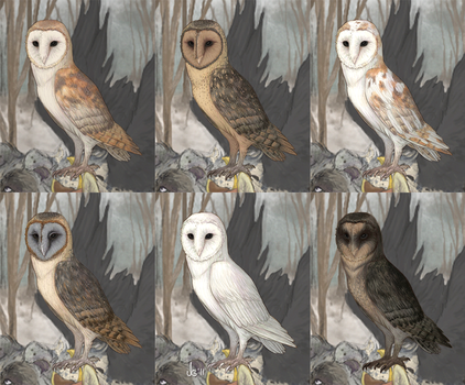 Alacrity - Owls by PleasedAsPunch