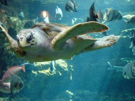Sea Turtle 2 by LinzStock