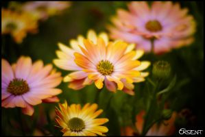 Flowers by ersen-t