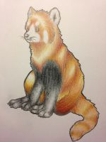 Red Panda by Yellow-K9