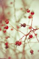 Red Orbs by Molosseraptor