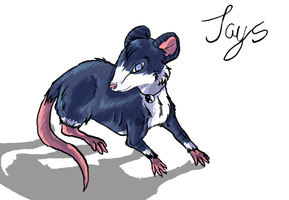 Jays the Rat by VilotShadowHunter
