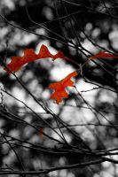 Autumn Leaves 2 by austinh2o
