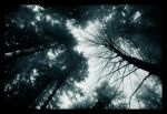 Forest universe by Ciril