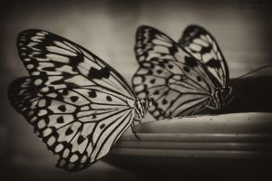 butterfly #2 by Sangvinar