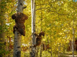 Bears in the woods wallpaper by kayaksailor
