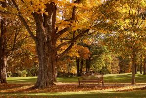 Autumn bench by jamberry-song
