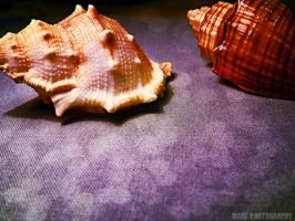 Shells by Madz4ever
