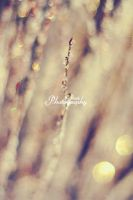 Christmas Bokeh by AniekPhotography