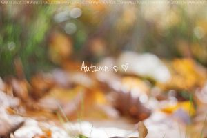Autumn is love by Lilplague