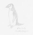 30DDC D29 Chinstrap penguin by Alhippa
