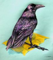Quoth The Raven by RealNsurreal